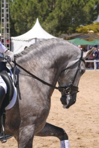 Fiecval-caballo