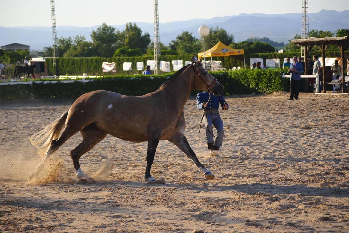 campeonato caballos01-min